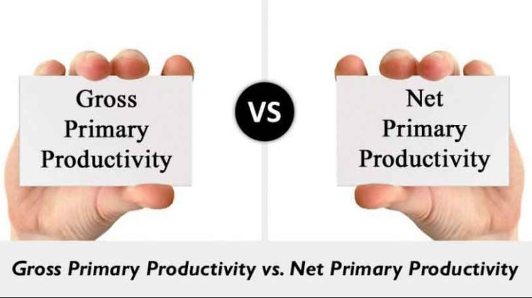 Difference between Gross and Net Amount